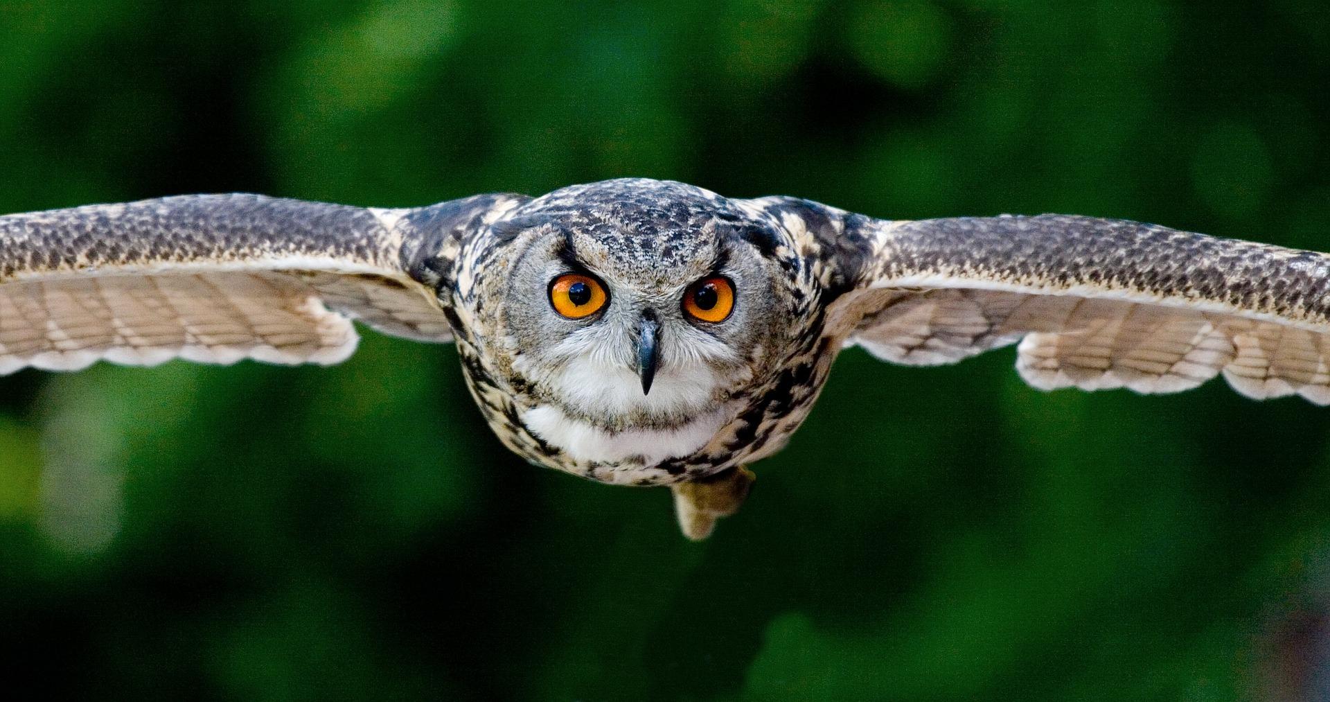google owl actualizacion algoritmo google
